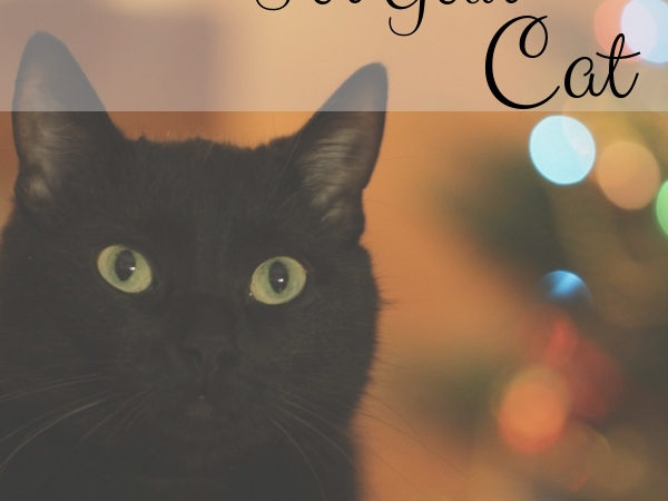 Christmas Gift Guide for Your Cat